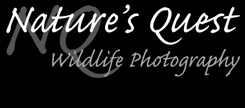 Nature's Quest Wildlife Photography